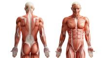 Abnehmen und Muskelaufbau